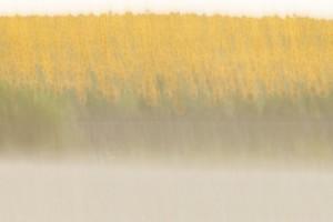 Landscapes #01 (c) Anatoly Rudakov